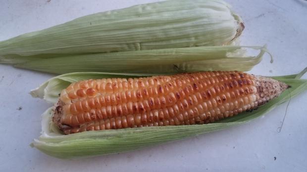 maize, corn, roasted maize
