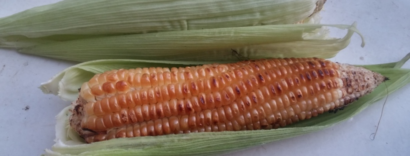 maize, corn, roasted maize